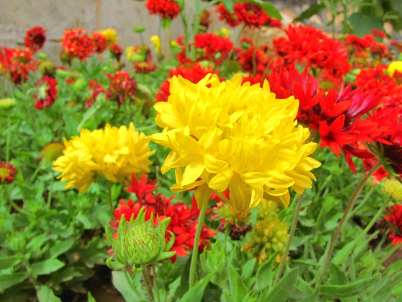 Beautiful beauti flower images beauti flower a2aad0d0 49d7 4078 95b2 241d6b670ae7 height1080 izmirmasajfo