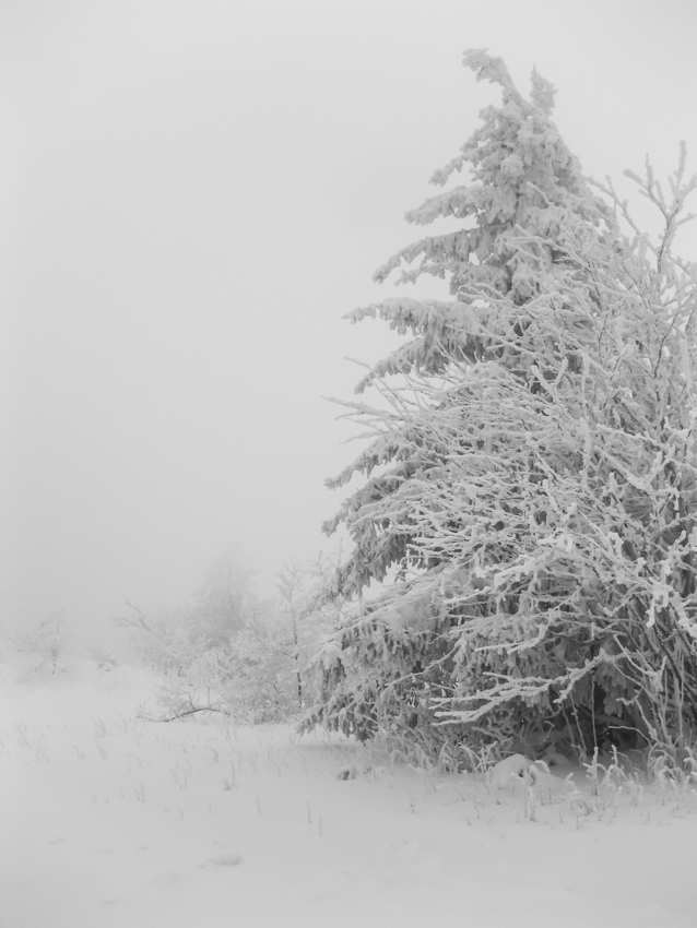 beautiful winter #1