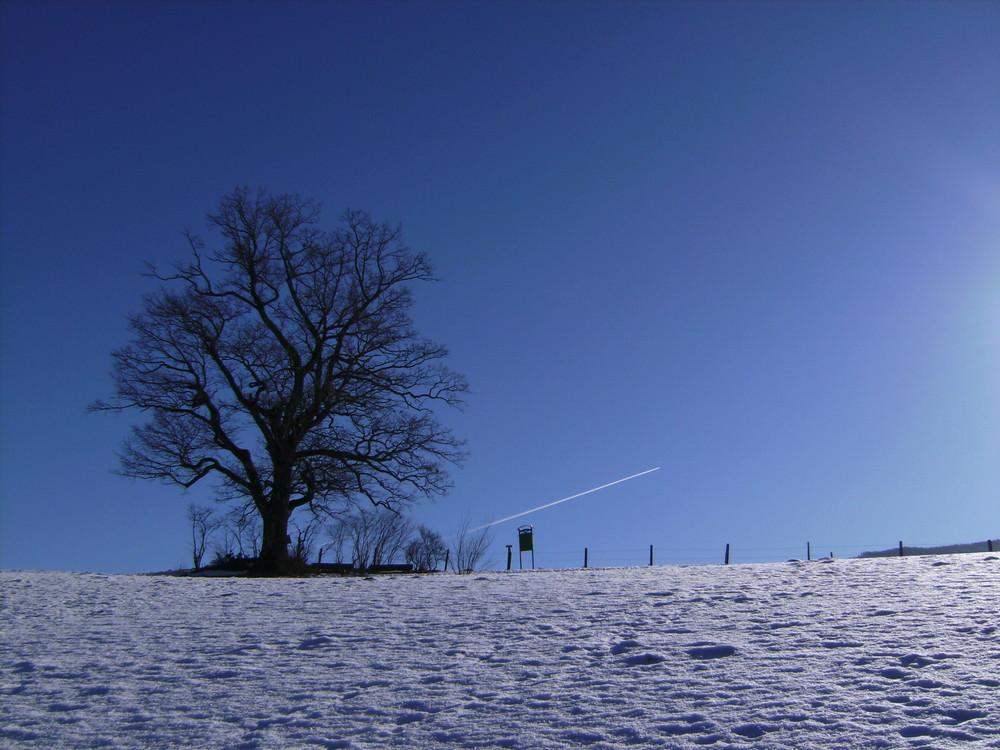 beauty blue(tree) and plane