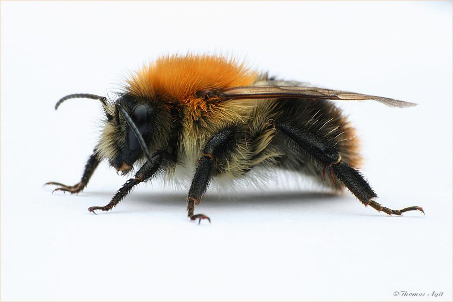 Beauty-Retusche an einer flotten Biene