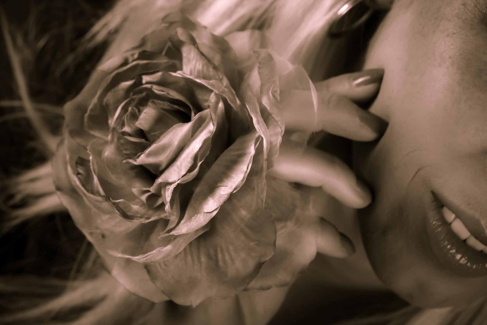 beautyfull rose ...