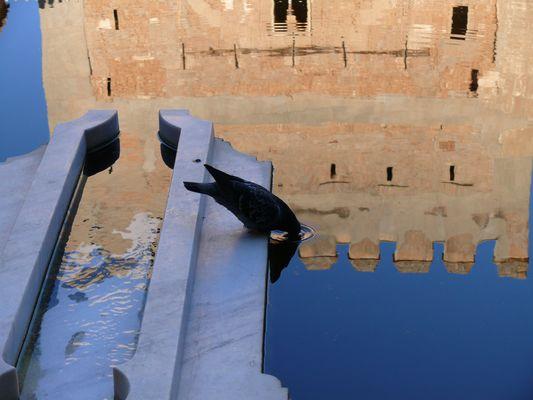 Bebiendo la Alhambra