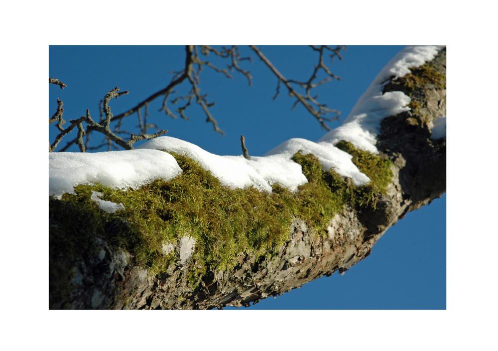 .....bedeckt von Schnee und Moos....