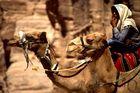 Beduine in Petra