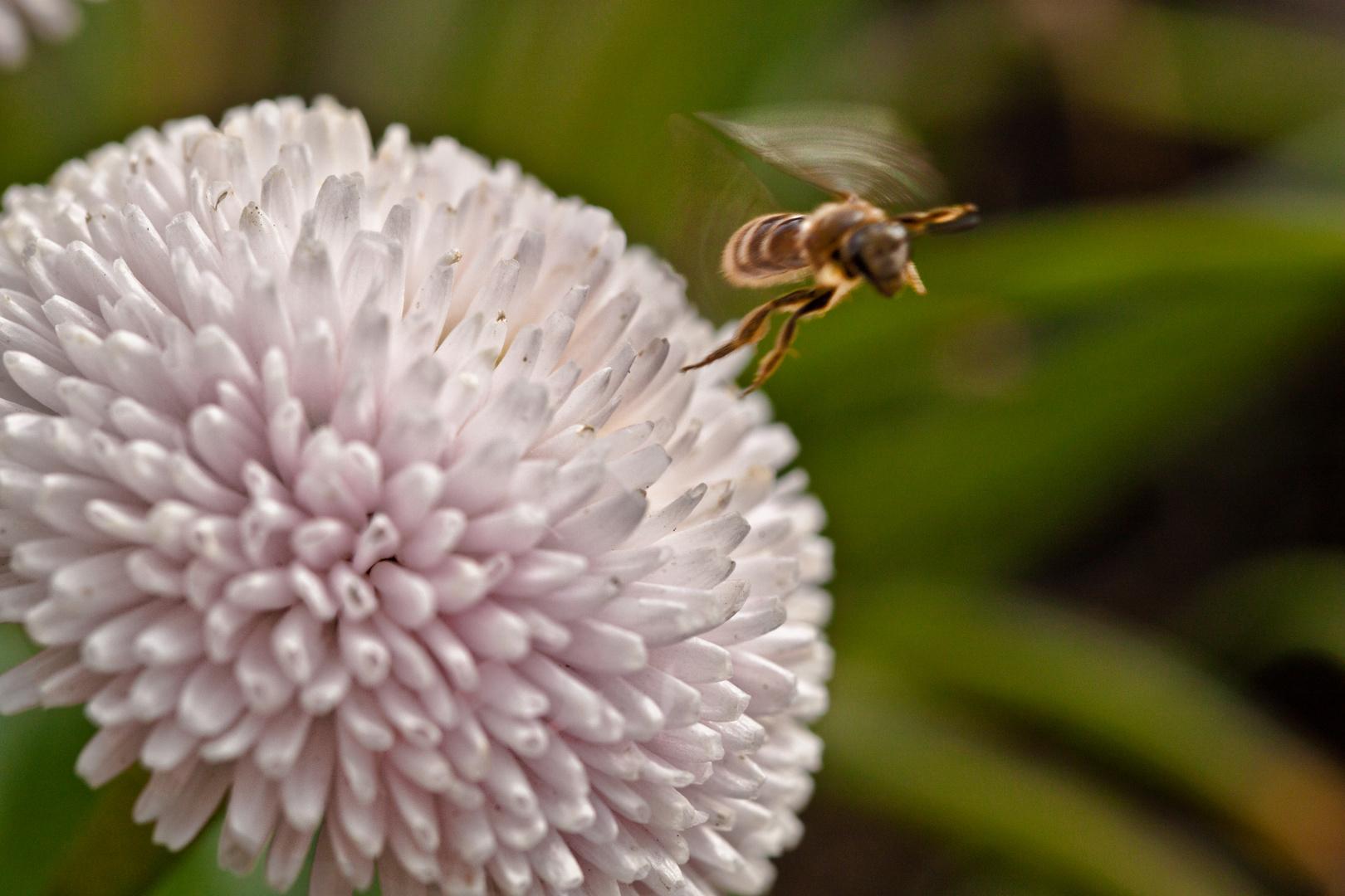 Bee Flugstart