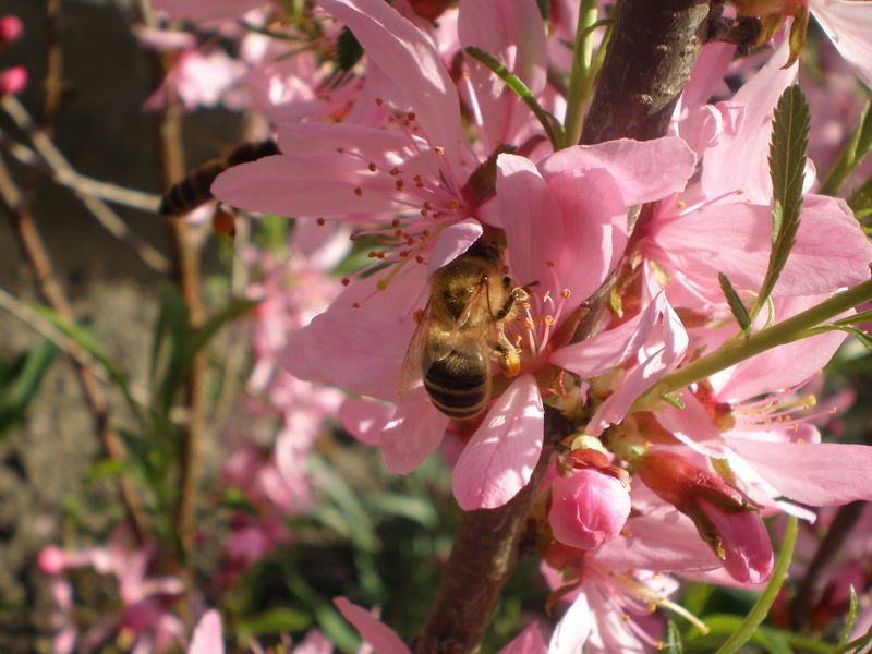 Bee in the pink :)