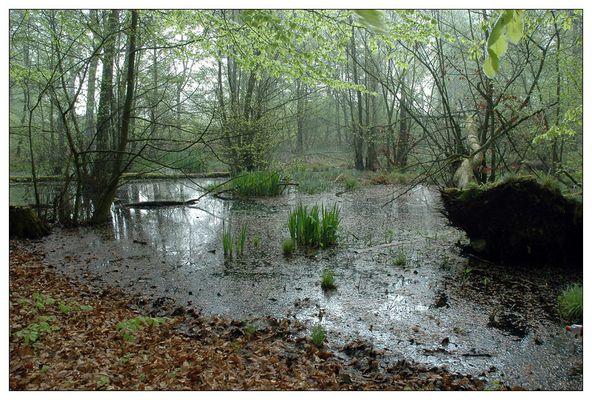 Beechwood pond