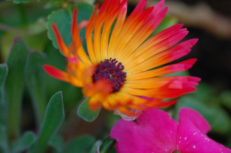 Beeindruckende Farben
