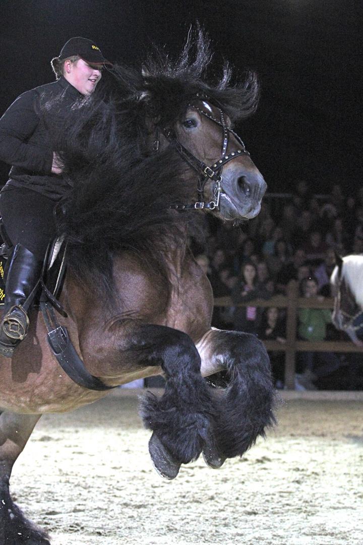 Beeindruckender Kaltblüter auf der Hund und Pferd 2011 in Dortmund