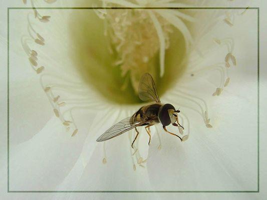 Beeleave
