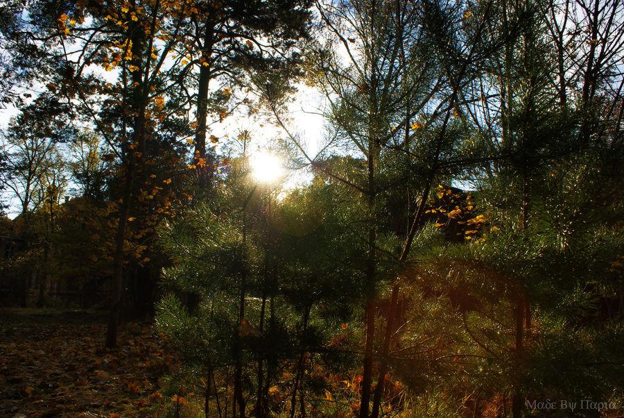 Beelitz im Herbst.