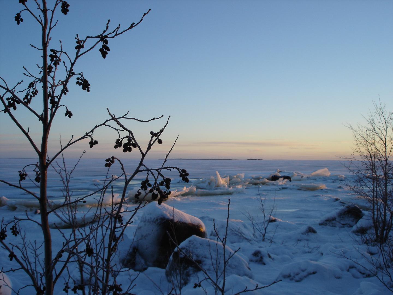 Beeren am Rande des Eismeers
