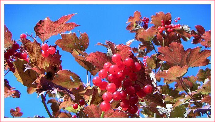 Beeren am Straßenrand