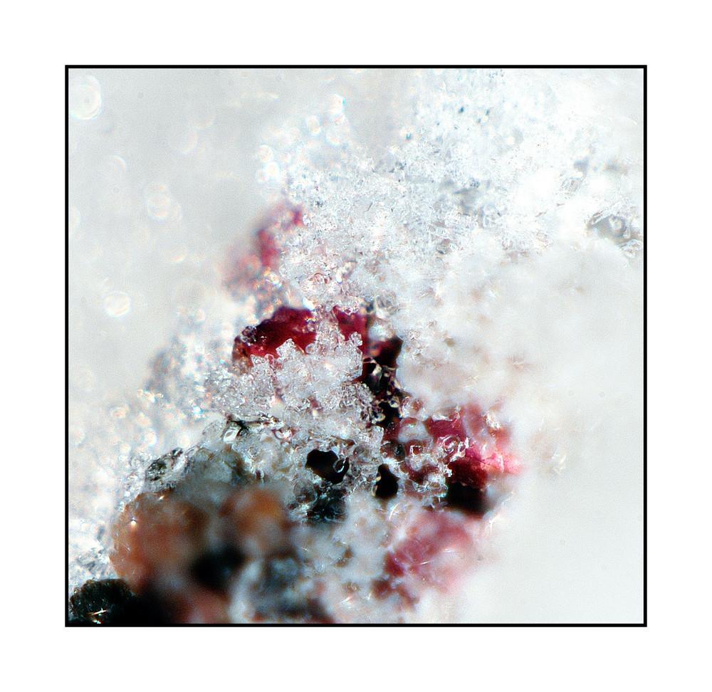 Beeren auf Eis