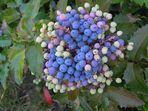 Beeren in schönen Farbnuancen