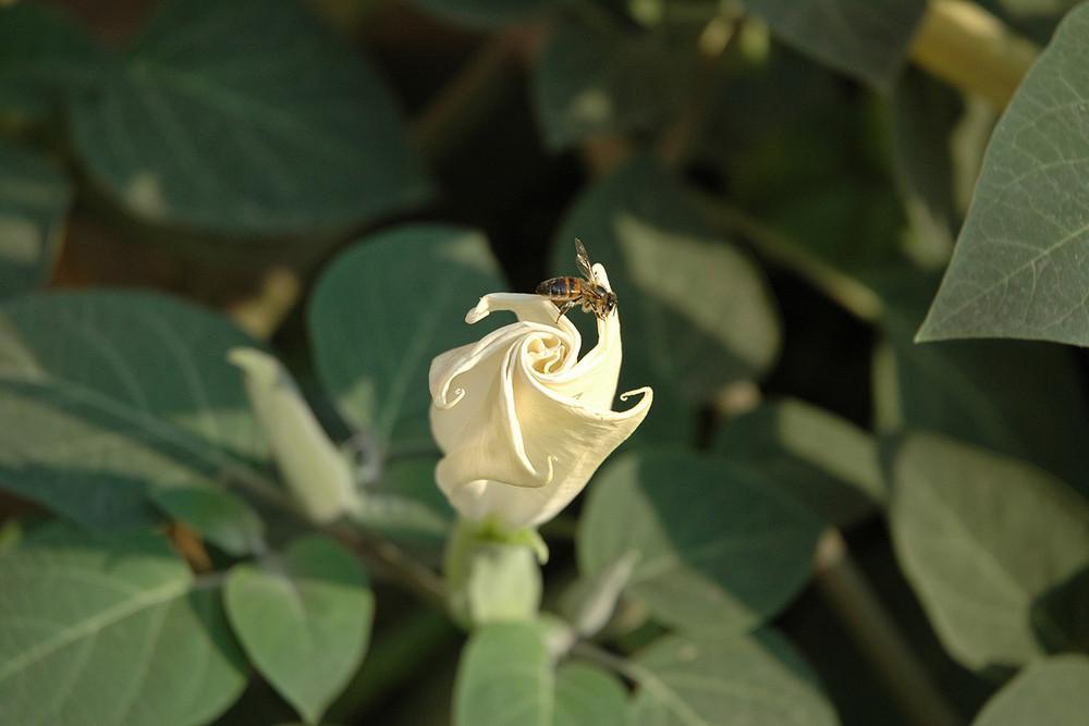 Bee's Delicate Armchair