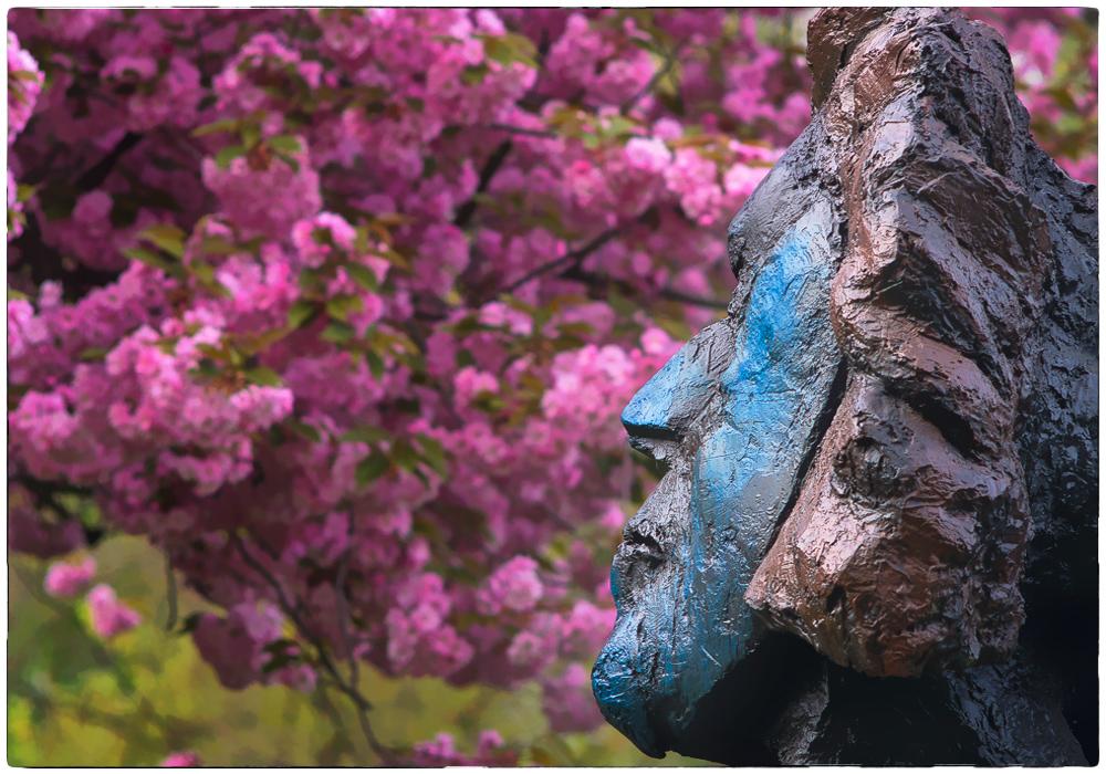 Beethoven & Kirschblüten