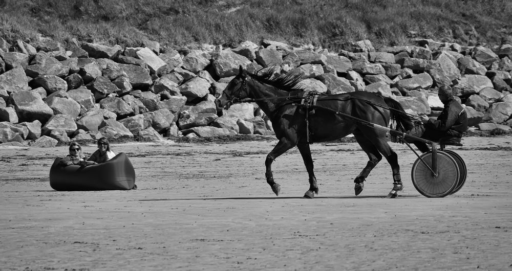 Begegnung am Strand von Dossen!!