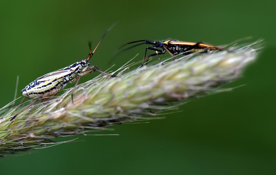 ...Begegnung im Gras