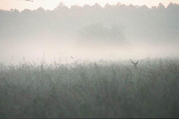 Begegnung im Morgennebel