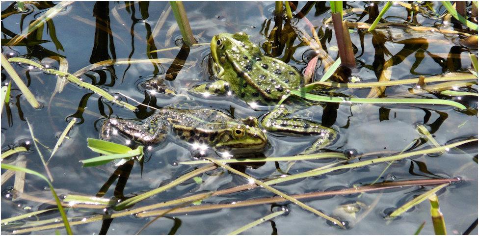 Begegnung im Teich