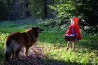 Begegnung im Wald...