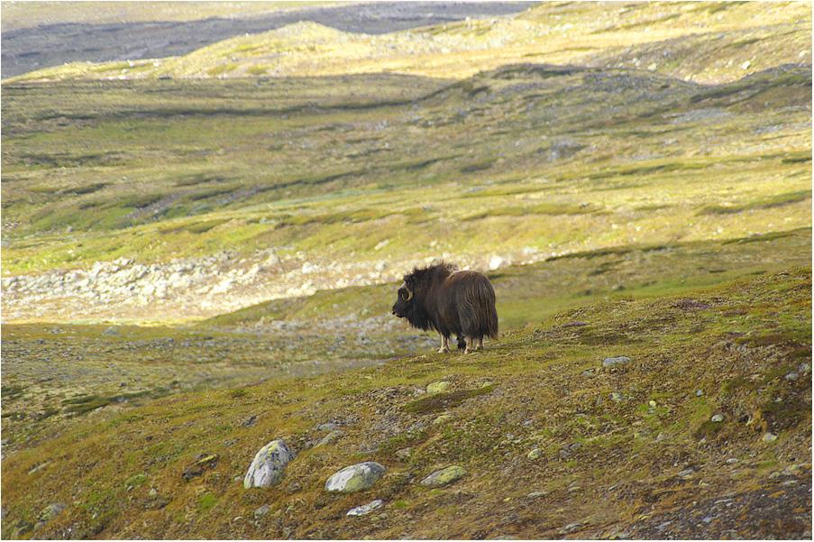 Begegnung in der Tundra