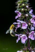 """Begegnung Insekt - Blume im Biotop """"Alte Fahrt"""""""