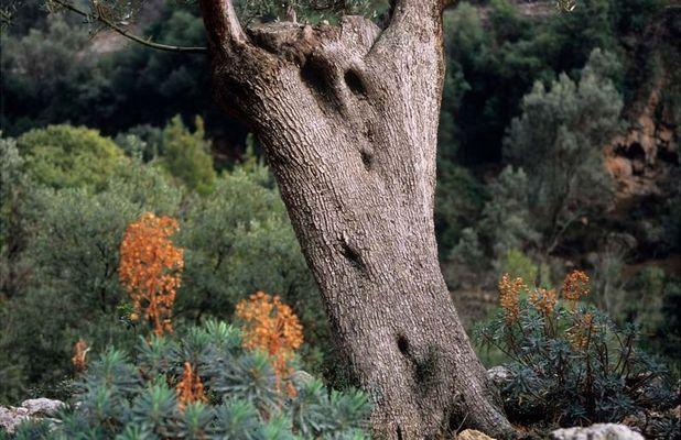 Begegnung mit einem Baummenschen