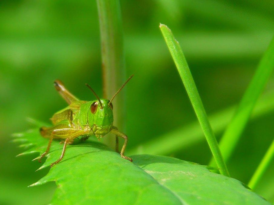 Begegnung mit einem strengen grünen Männchen
