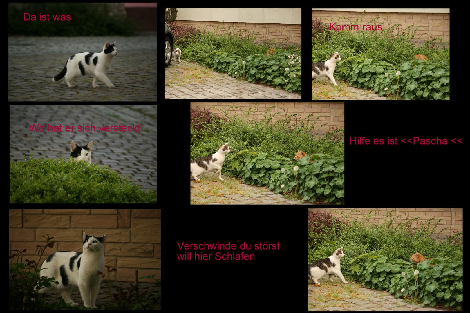 Begegnung mit Katze