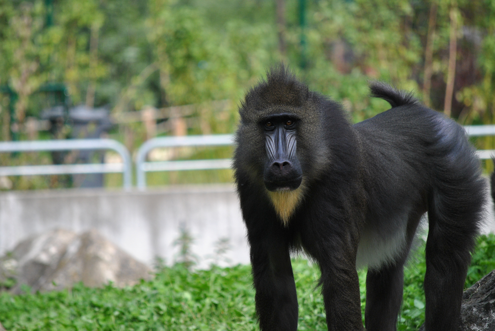 Begegnungen im Zoo