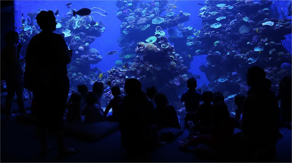 Begeisterung pur (vor der Scheibe) im Meeresmuseum in Palma de Mallorca