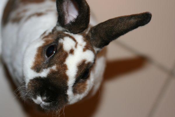 Begging Rabbit