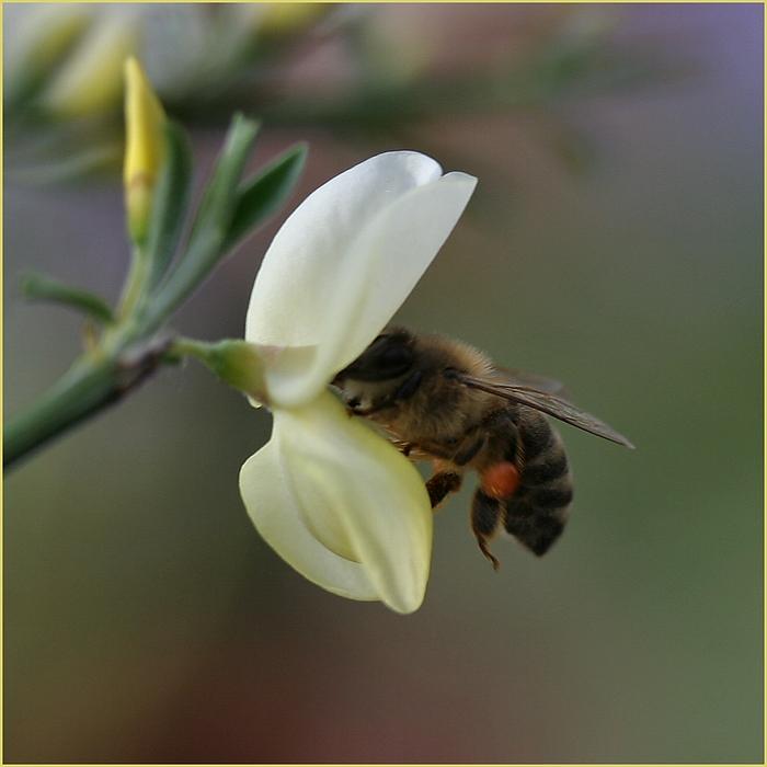 Beginn der Honigproduktion