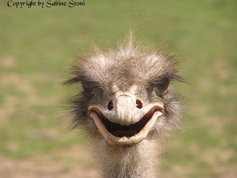 Begrüße einen neuen Tag mit einem Lächeln!