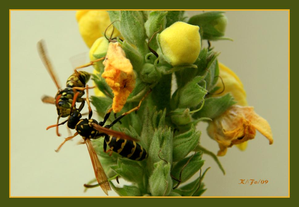 Begrüßung auf Wespen Art. Nr.1