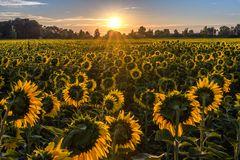 Begrüßung des Sonnengottes
