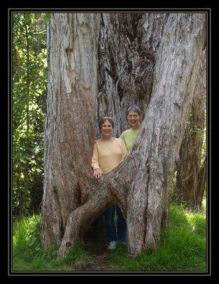 Behind the Saddle Tree
