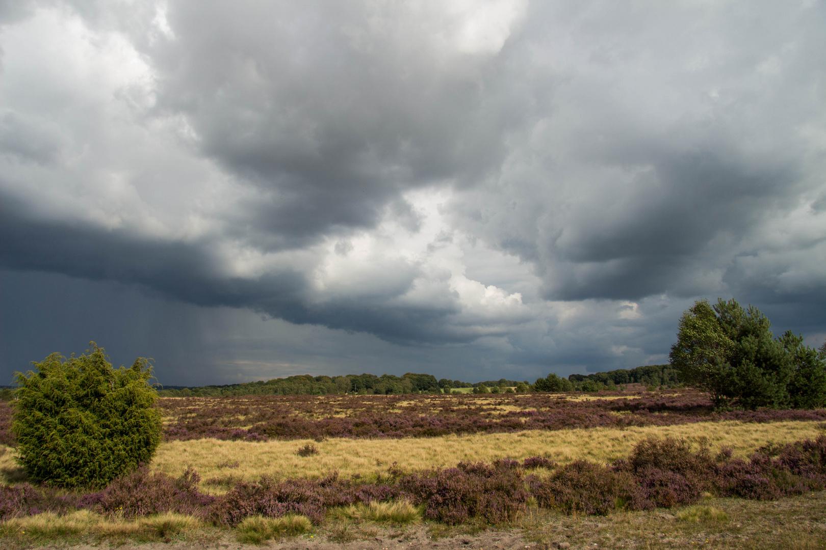 Behringer Heide 3