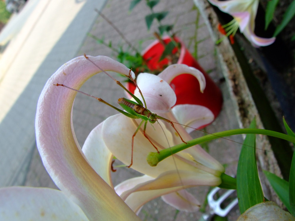 bei der Gartenarbeit entdeckt
