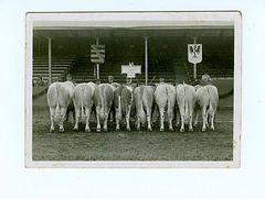 Bei der Viehprämierung