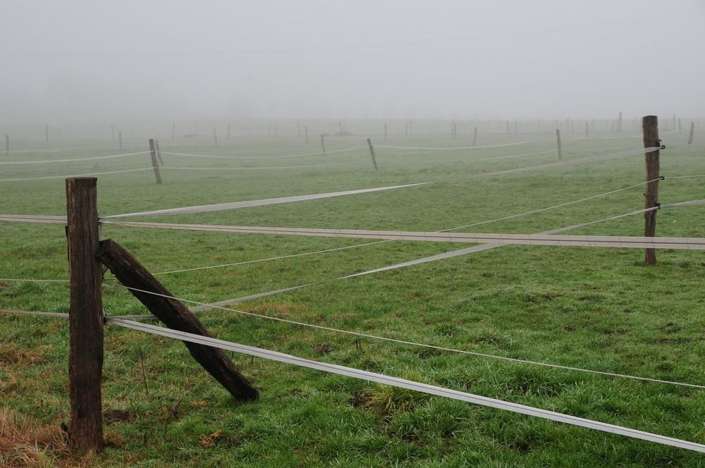 bei diesem Wetter sind noch nicht mal die Pferde draußen