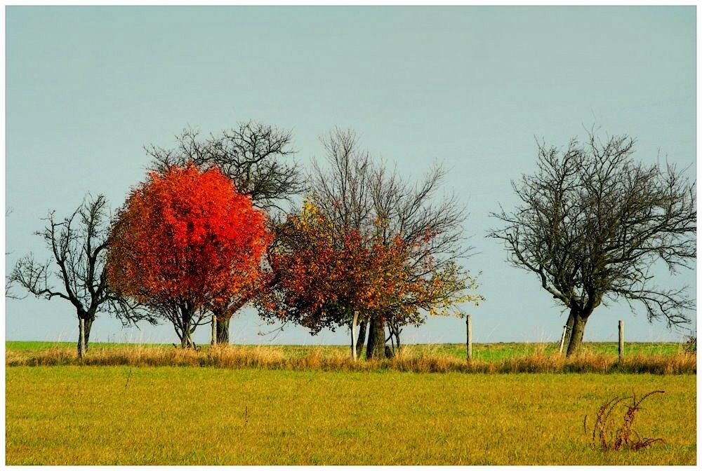 Bei ein paar Bäumen...