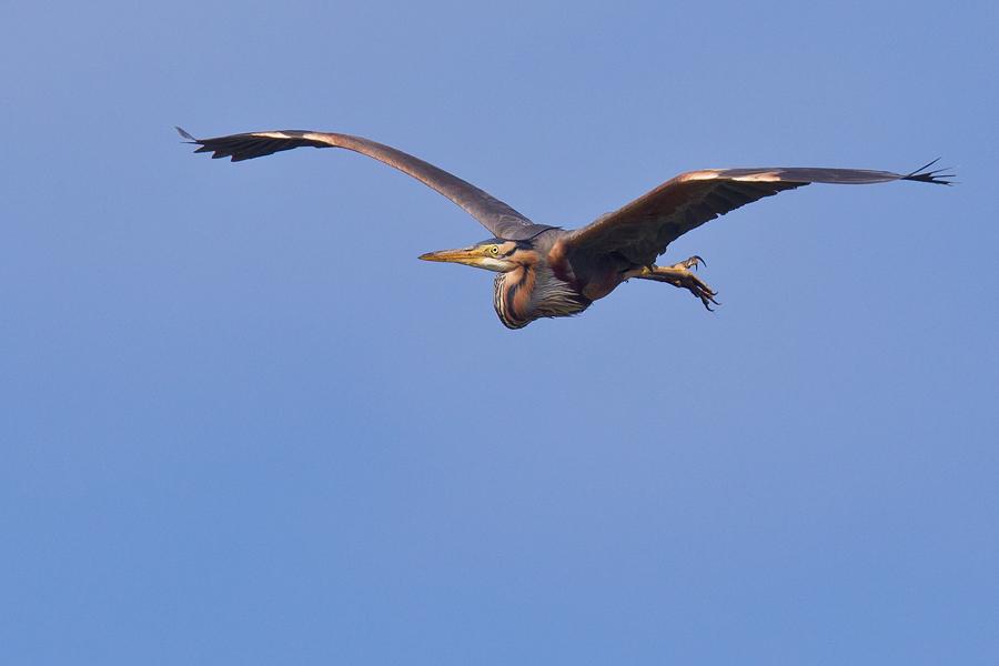 Bei einem der seltenen Überflüge