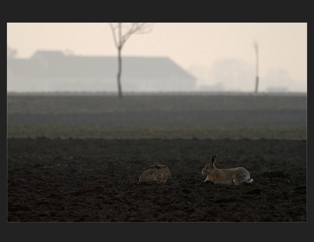 bei familie hase...