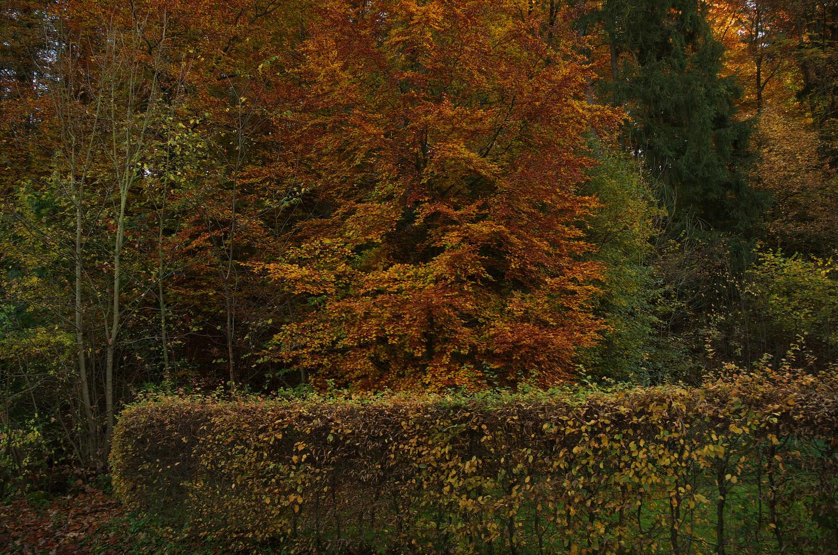 bei Leonberg Oktober 2013