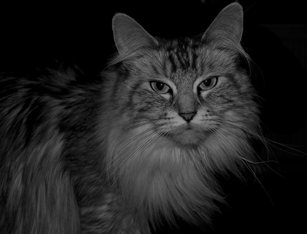 Bei Nacht sind alle Katzen grau