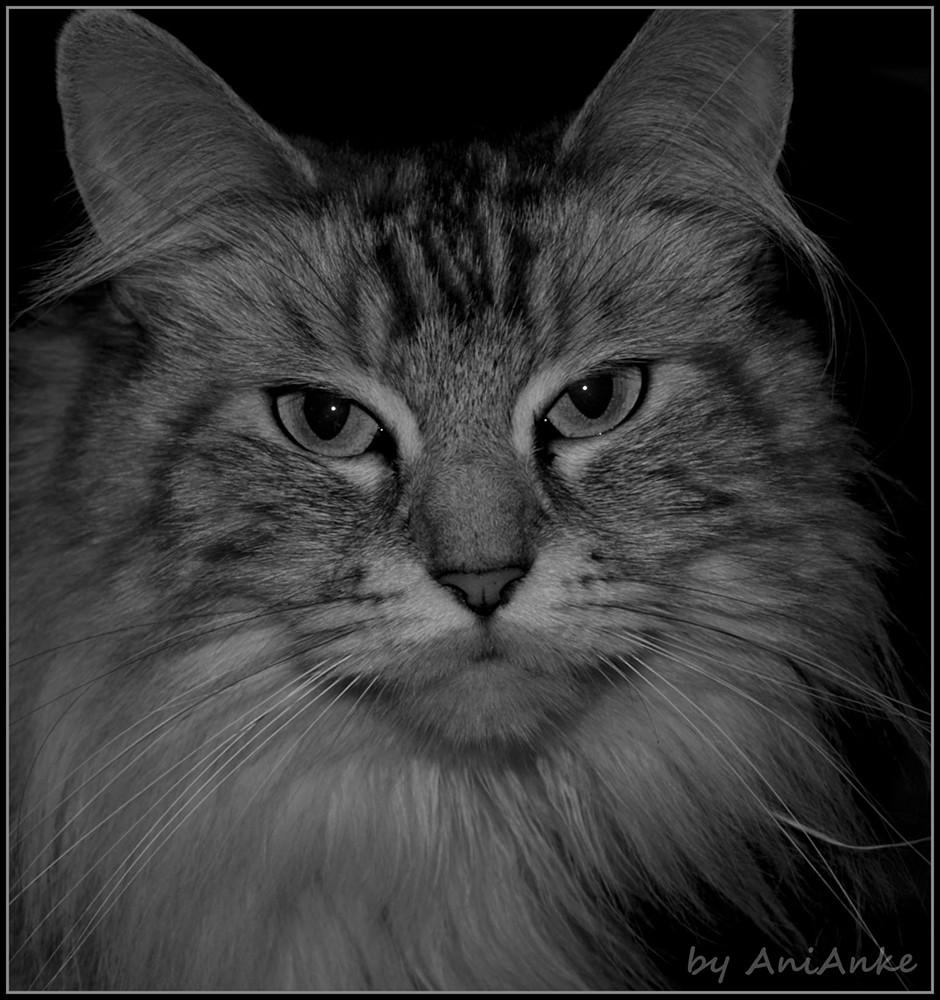 Bei Nacht sind alle Katzen grau II