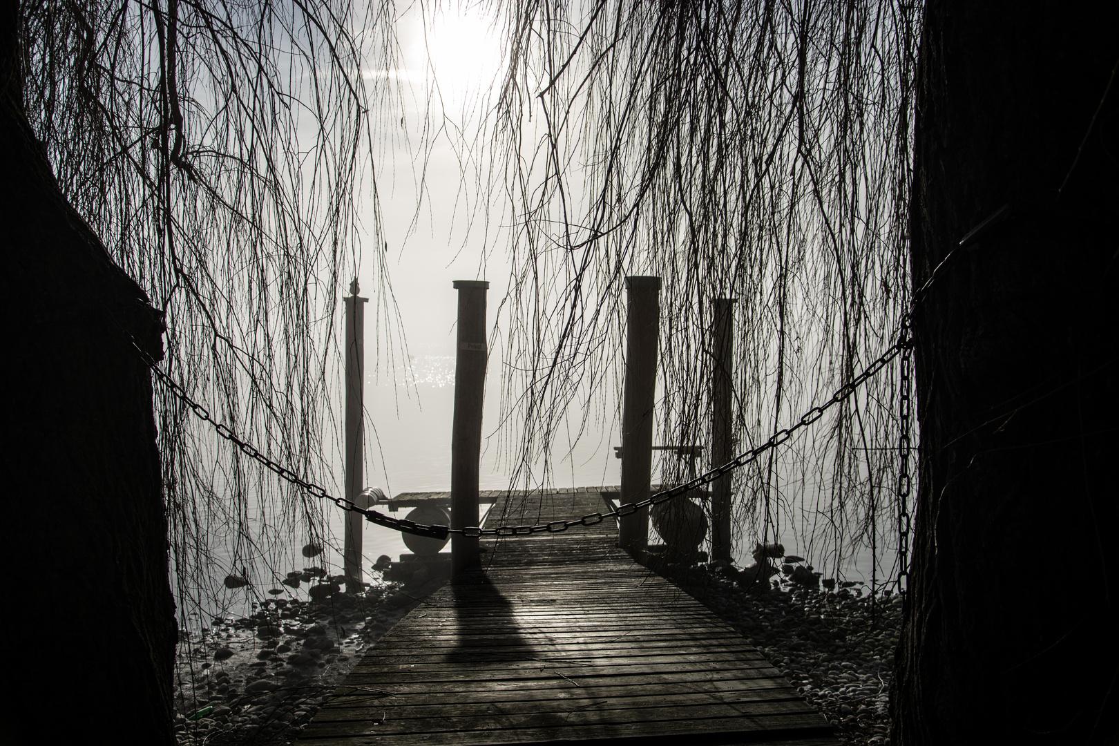Bei Nebel am Bodensee